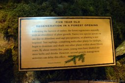 Five Year Old Regeneration in a Forest Opening