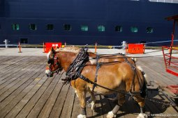 Two ponies at the Ketchikan docks.jpg